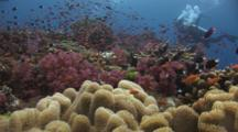 Pretty Coral Reef With Underwater Videographer