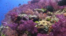 Pretty Coral Reef Teeming With Marine Life And Tropical Fish
