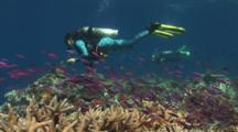 Scuba Diver In Brightly-Colored Diving Suit Explores Coral Reef With Staghorn Coral And Anthias