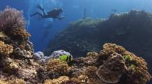 Scuba Divers Explore Pretty Coral Reefs At North Save-A-Tack, Fiji