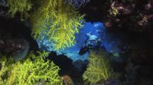 Underwater Photographer Shoots Pretty Chironephthya Soft Corals