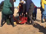Dolphin Stranding