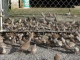 Hundreds Of Birds At Bird Feeder