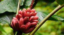 Tropical Rainforest Flowers And Fruit, Hawaii