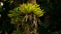 Light Green Bromeliads On Tree Trunk
