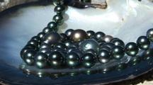 Black Pearl Of Tahiti In Shell