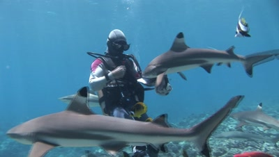 Shark Diving Stock Footage