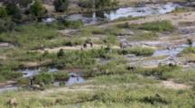 African Elephant (Loxodonta Africana) Family In Olifants Riverbed Kruger National Park