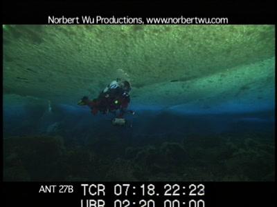 Antarctica Underwater, Diver Under Sea Ice