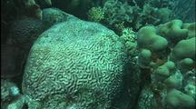 Scenic Coral Reef With Diseased Brain Coral