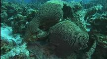 Scenic Coral Reef, Diseased And Healthy Brain Coral