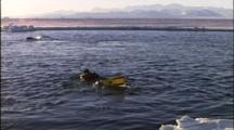 Filmmaker Snorkels To Film Orcas Swimming Near Ice Edge