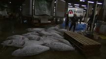Workers Unloading Frozen Tuna, Tsukiji Fish Market