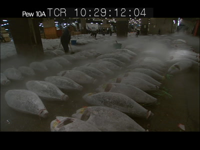 Worker Cleans Frozen Tuna Carcasses, Tsukiji Fish Market