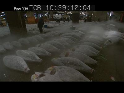 Worker Cleans Frozen Tuna Carcasses, Tsukiji Fish Market