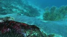 Coral Reef Scenic, Over Bommie, Coral Grouper, Sand Bottom