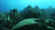 Travel Over Healthy Reef To A Large Area Of Dead Coral