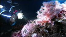 Diver Photographs A Sea Spider