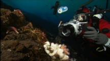 Diver Photographs Sea Spider