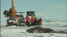 Baby Seal Suckles As Rig Drills Through Ice
