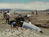 Pan L - R As Conservationists Dig Trench And Spray Hose Over Stranded Short Finned Pilot Whales