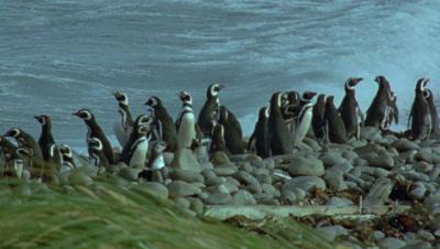 Penguin Film Stock Footage