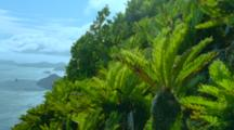 Palm Trees On Hillside High Above The Sea With Islands Below