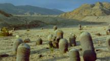Barrel Cactus Facing The Sun In Desert Landscape With Steep Mountains