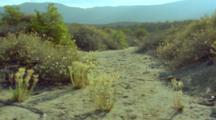 Sparse Desert Vegetation, Flowering