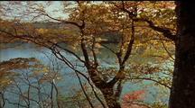 Autumn Beech On Riverbank