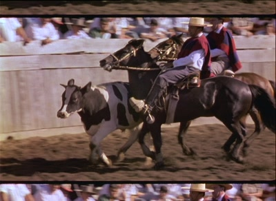 Two Cowboys Force Bull To Run Around Gaucho Rodeo Perimeter