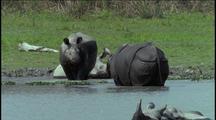 Indian Rhinos Wallow In Waterhole