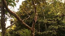 Tilt Down Trunk, Ms Bromeliad Growing On Trunk F/G, Canopy B/G