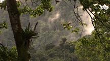 Mcu Tree And Foliage, Bromeliad, Mist Blows L In B/G