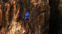 Z/I Ms Tra Solitary Metallic Blue Bee Climbing And Flying Up Tree Stump, Colourful