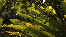 Bromeliad Leaves In The Sun