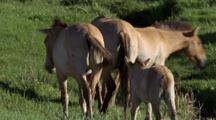 Young Wild Horse Following Behind Others