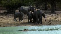 Elephants Hestitate At Carcass In Waterhole