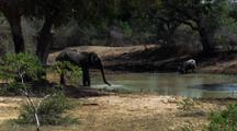 One Elephant And One Water Buffalo Drink From Shady Waterhole