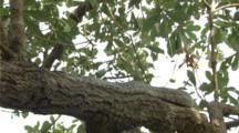 Large Python Snake Moves Through Jungle