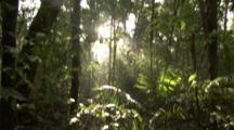 sunlight streams through jungle, tilt up