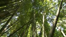 Jib Down Bamboo Thicket Along Length Of Trunk