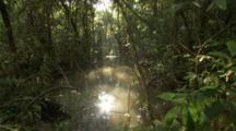 Sun Streaming Through Jungle, Reflected In Water Of Swamp