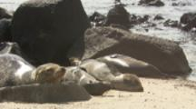 Sea Lions sleep On Beach, Galapagos