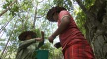 People Remove Shipworms (Tamilok) From Log In Mangrove Forest,One Person Eats One