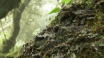 Close Up Fungus, Lichens On Tree In Cloud Forest