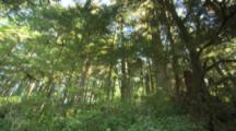 Circular Pan Of Coniferous Forest, Low Angle