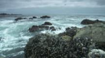 Rugged, Rocky Beach, With Exposed Mussel Beds, Vancouver Island
