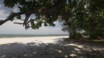 Trees On White Sand Beach