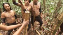 Indigenous People In Amazon Forest,Bullet Ant Ritual,collect ants and put in bamboo pole